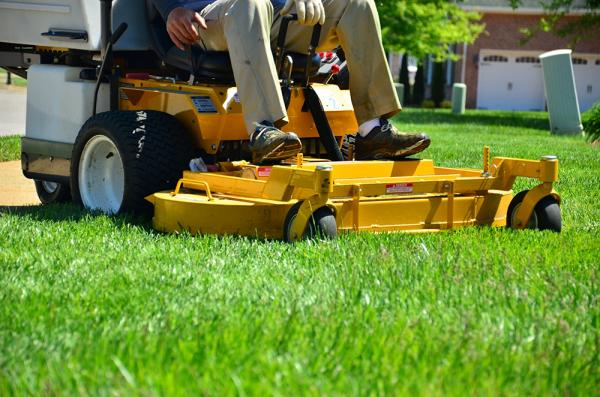 Professional Lawn Mowing Service in Sunshine Coast