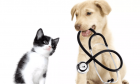 Professional Animal Vaccination in Victoria