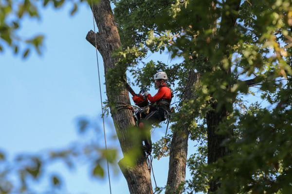 Choose the Best Arborist in Central Coast NSW